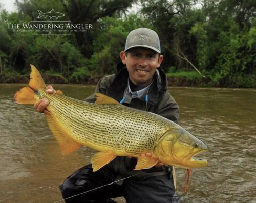 The Wandering Angler - Argentina Golden Dorado001
