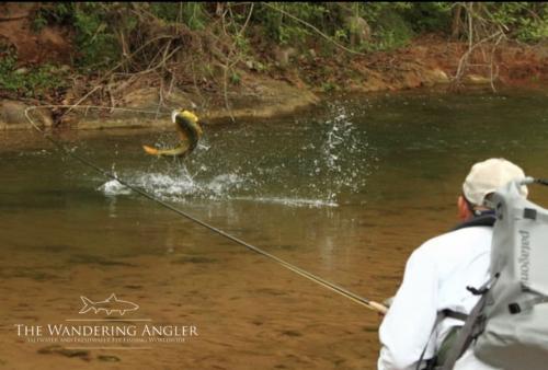 The Wandering Angler - Argentina Golden Dorado005