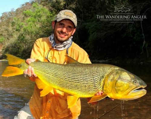 The Wandering Angler - Argentina Golden Dorado030