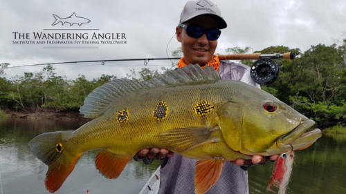 The Wandering Angler - Colombia Peacock bass004