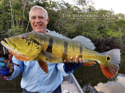 The Wandering Angler - Colombia Peacock bass005