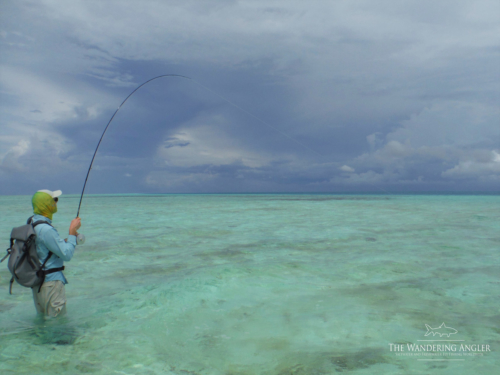 The Wandering Angler - Maldives Lodge0002