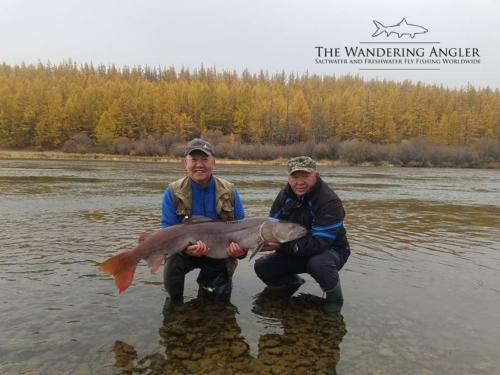 The Wandering Angler - Mongolia taimen0025